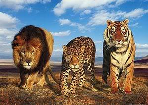 !!!!!THE BIG CATS CLUB!!!! - Tagged